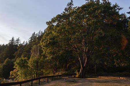 sunlight streaming through the trees near sunset Zdjęcie Seryjne