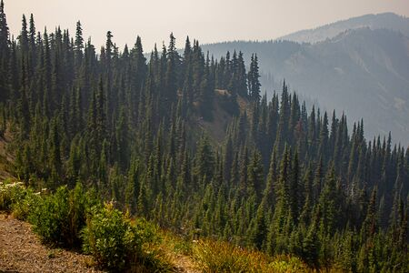 trees forest and mountainsides leading into distance in washington forest Imagens