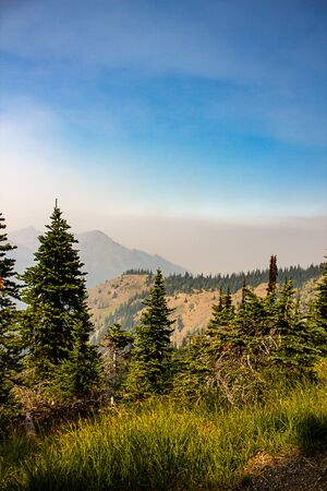 trees forest and mountainsides leading into distance in washington forest 免版税图像