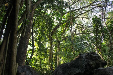 dark vivid green leafy canopy of a deciduous forest in early summer 免版税图像