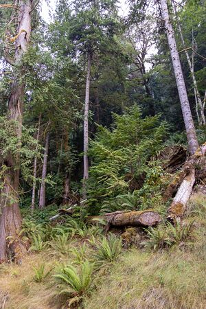 grass and fern on thin deer trail through tall old forest 免版税图像