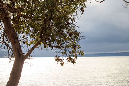 distant horizon past a large madrona tree