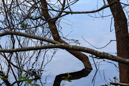 branches coming from the water with clear reflections