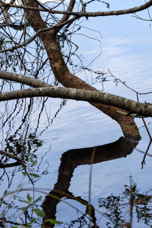 abstract branch bending down into water reflection