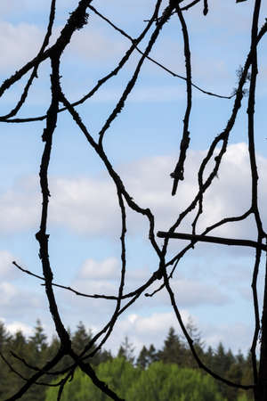 silhouetted branches in front of blue sky and forest Zdjęcie Seryjne