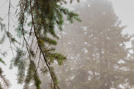 branches hanging from tree in foggy morning light