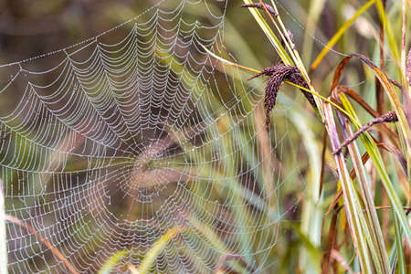 full spiderweb from an orbweaver in tall grass
