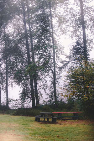 benches sit off to the side of a foggy lake