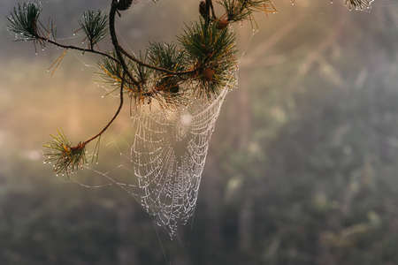 light sparkles on spiderweb with dew drops