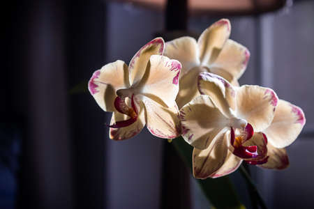 orchids glowing in light from windows near lamp