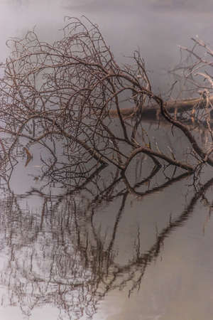 mirrored branches of a fallen tree in small lake Zdjęcie Seryjne - 157097216