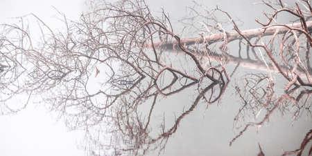 fallen tree mirrored on calm silver foggy lake Zdjęcie Seryjne