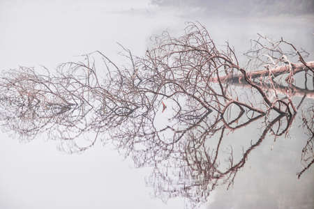fallen tree mirrored on calm foggy lake Zdjęcie Seryjne - 157097220