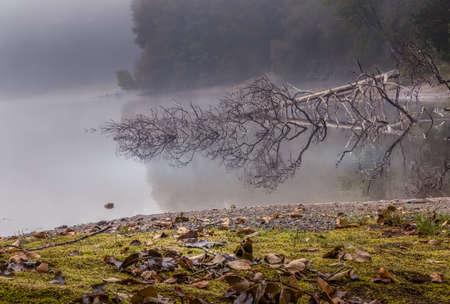 tree mirrored in foggy lake with mossy bank Zdjęcie Seryjne