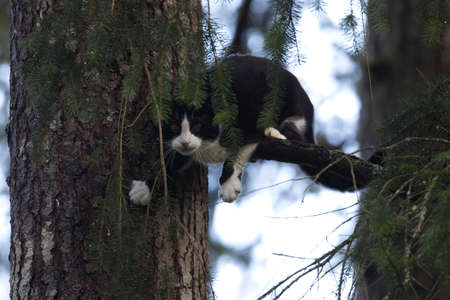 young black and white cat clinging to a tree 스톡 콘텐츠