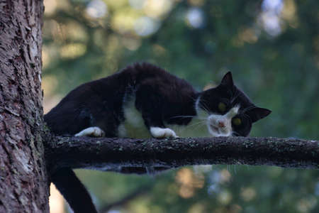 young adult cat perched high up in a tree