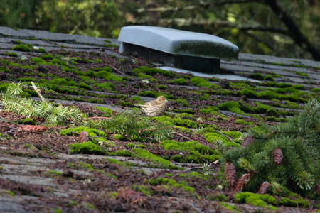 moss covered roof in need of repair with bird