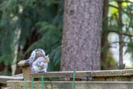 squirrel climbing around on fence and tree