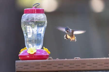 small hummingbird hovering near feeder in bright sunlight 스톡 콘텐츠