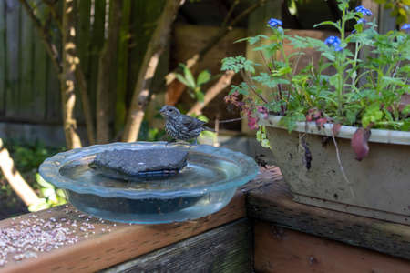 small finch perched on the edge of a pie plate