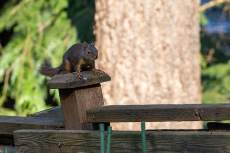smallred chipmunk standing on a wooden fence 스톡 콘텐츠