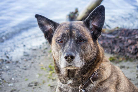 brown and gray brindle dog sitting along side shoreline