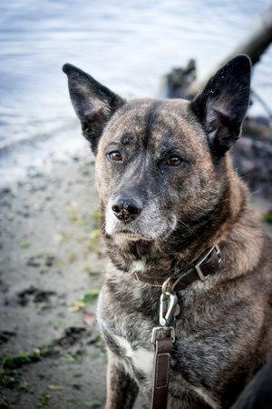 brindle dog sitting along side shoreline 스톡 콘텐츠