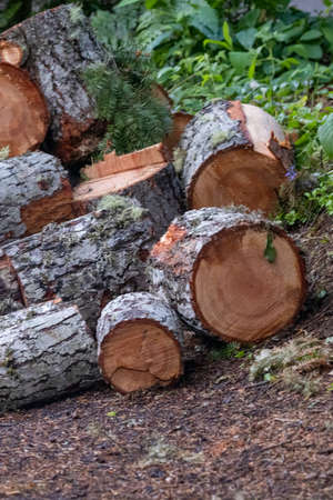 pile of cedar ready to chop and stack