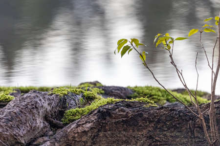 moss covering the root base of a tree