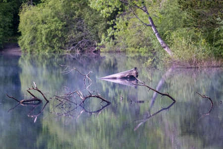 summer lake with sticks reflected on the water