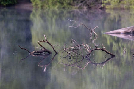 tree branches reflected on small summer lake