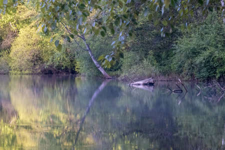 thick forested embankment of a lake reflecting the trees