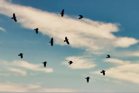 large murder of crows flying in blue sky with clouds