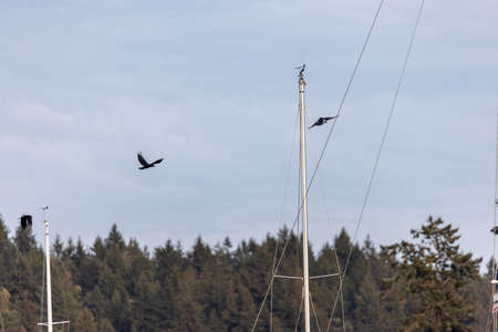 two crows flying above a sailboat docked in the evening