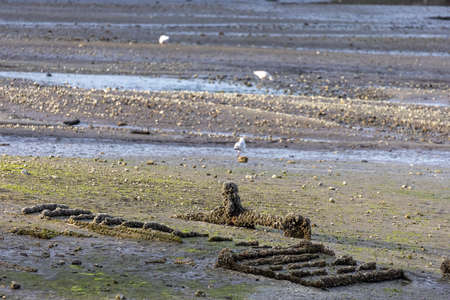 old eroded sea bed at low tide