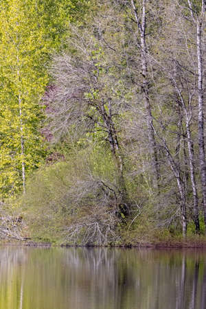 Trees growing on the bank of a lake
