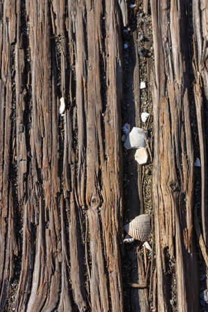 broken clam shells in the cracks of a plank