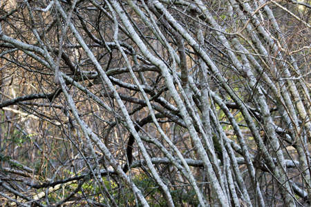 tangled branches of bushes in forest clearing