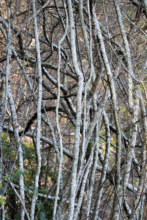 crisscrossed logs of small trees and bushes