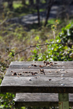 old wooden plank tabletop of picnic bench covered in leaves