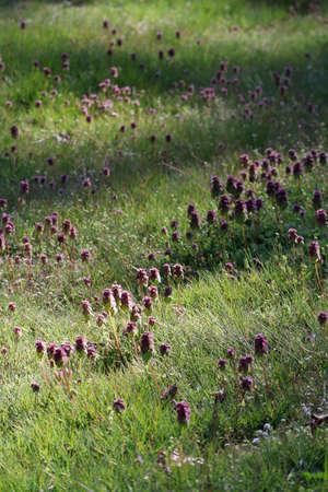 wild purple flowers growing in green lawn