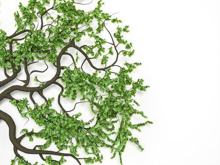 Weird Zweige mit Blatt auf weißem Hintergrund. 3d render