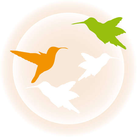 Cute illustration of hummingbird Vector