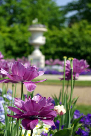 meaningful: Close-up of flowers in a park with a fountain on the background