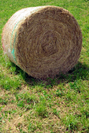 Rolled hay 2 photo