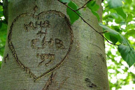 bark carving: Drawing of an heart carved in the trunk of a tree. Stock Photo