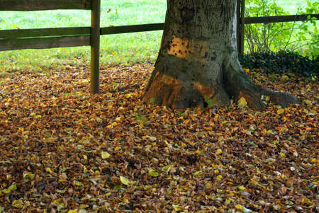 russet: Detail of ground with a russet bed and a trunk.