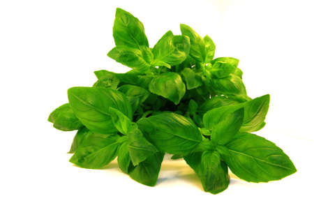 Close-up view on a fresh basil bouquet.