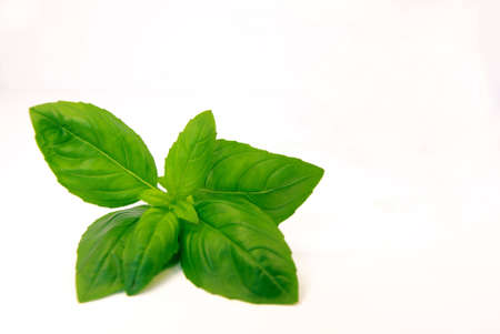 Close-up view of fresh basil over a white background