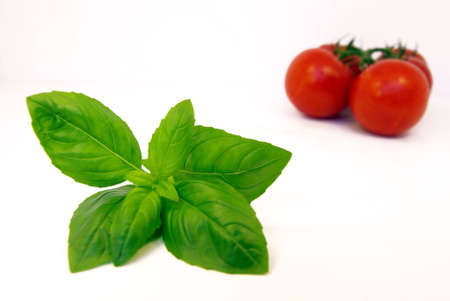 Close-up view on some basil with vine tomatoes in the background. photo